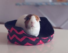 Guinea Pig Cuddle Cup with Absorbent Pad / Guinea Pig Bed / Fleece / Pink, Black / Chevron / Cozy / Size Large / On the Edge
