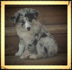 What a cut puppy