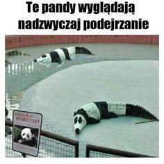 Cursed Images With Hidden Dark Humor cursed_wookie Cursed_Warning cursed_toilet Cursed_sweater cursed_snowmen cursed_prom Cursed_Passenger cursed_panda