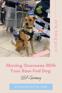 How To Move Overseas With Your Raw-Fed Dog - K9sOverCoffee