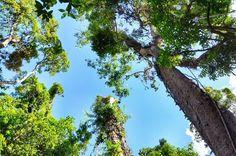 My Dreamtime Walk Through Daintree Rainforest in Australia