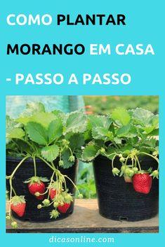 Eco Garden, Indoor Garden, Garden Plants, Indoor Plants, Outdoor Gardens, Garden Veranda Ideas, All Berries, Sweet Home Design, Comment Planter