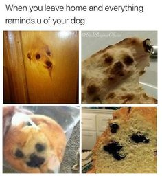Really Funny Animal Pictures That Make You Cry With Laughter - 33