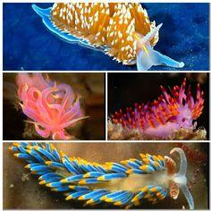 Sea slugs collage 3