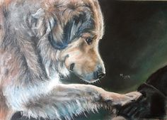 Shepherd Dog, soft pastels 40x30 cm, based on a photo from http://www.loveunderdogs.org/ (an organization that helps the adoption of unwanted dogs from Romania) with their kind permission.