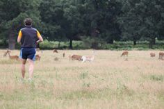 Richmond Park - Londres