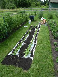 Newspaper weeds away! Start putting in your plants, work the nutrients in your soil. Then wet newspapers, put layers around the plants overlapping as you go, cover with mulch, and forget about weeds. Organic Gardening, Gardening Tips, Unique Gardens, Dream Garden, Lawn And Garden, Garden Projects, Garden Inspiration, Vegetable Garden, Garden Landscaping