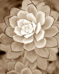 White succulent