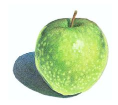 Use Watercolour and Coloured Pencils to Paint a Granny Smith Apple Learn Watercolor Painting, Watercolor Beginner, Watercolor Fruit, Watercolor Disney, Watercolor Tips, Watercolour Tutorials, Watercolor Artists, Watercolor Illustration, Watercolor Flowers