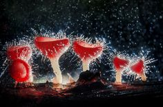 Photograph Champagne Mushroom ♦️️More Like This At Fosterginger @ Pinterest♦️️