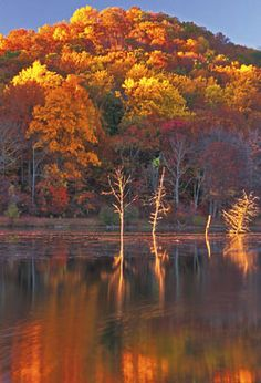 Fall Colors, in South Jersey. Wharton state forest is just beautiful Autumn Scenery, Autumn Trees, Autumn Leaves, Beautiful World, Beautiful Places, Beautiful Pictures, By Any Means Necessary, Seasons Of The Year, Fall Displays