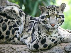 Mehao Wildlife Sanctuary in Arunachal Pradesh, Indi