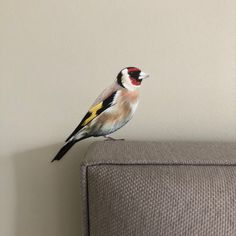 This little Goldfinch is my latest painting to be turned into a removable wall sticker/decal! Gertie has roosted and is now available to purchase from my website. Removable Wall Stickers, Vinyl Wall Stickers, Vinyl Wall Art, Animal Wall Decals, Goldfinch, Cupboard Doors, Resin Art, Amazing Art, Original Paintings