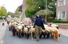 schapen herder - Google zoeken