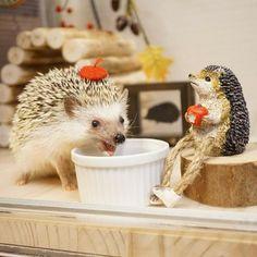 Happy Hedgehog, Hedgehog Pet, Cute Hedgehog, Animals And Pets, Baby Animals, Strange Animals, Super Cute Animals, Adorable Animals, Exotic Pets