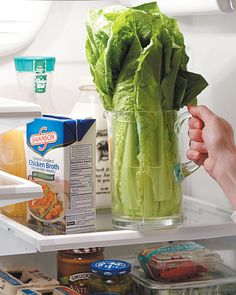 Lettuce Space Saver save refrigerator shelf space, store cleaned romaine lettuce upright in a pitcher. If you add a little water to the pitcher, the greens will stay vibrant and crisp longer -same with asparagus too