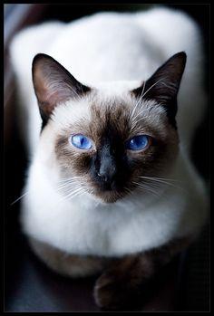 beautiful cat