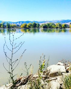My new neighborhood. I'm in . Vaikka on aina kiva odottaa seuraavaa matkaa (New York! Karibia!) tärkeintä on että arki on sen näköistä että siitä voi nauttia. Minä nautin päivittäin noista horisontin vuoristonäkymistä. Juuri nyt olen mieluiten Coloradossa.  #boulder #visitboulder #bouldercolorado #bouldercounty #colorado #visitcolorado #coloradolive #cometolife #coloradoliving #lake #järvi #twinlakes #travel #matka #reissu (via Instagram)