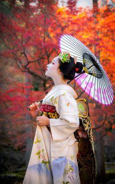 2015 祇園甲部 舞妓 まめ藤さん (引退) 2015 Gion kobu, maiko, Mamefuji (now retired)