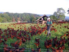 Urban Farming Archives | Urban ConversionUrban Conversion