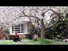 Deva Premal - The Gayatri Mantra Around The World - YouTube