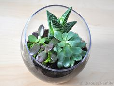 Love plants...but need some that are low maintenance - succulent terrarium sounds perfect.