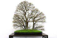 Wonderful forest Bonsai by Jürg Stäheli, photographed at the Noelanders Trophy
