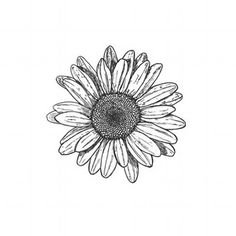 Black And White stickers featuring millions of original designs created by independent artists. White or transparent. 4 sizes available. Flower Drawing Tumblr, Daisy Drawing, Drawing Flowers, Daisy Painting, Side Tattoos, Small Tattoos, Margaritas Tumblr, Tattoo Studio, Daisy Flower Tattoos