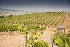 Cepas viejas de viura y nuevas de tempranillo blanco conviven en nuestros viñedos.