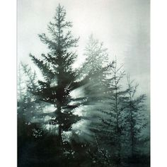 Pine Trees, Watercolor Art Print, Forest at Daybreak, Morning Fog,... ($25) ❤ liked on Polyvore featuring home, home decor, wall art, watercolor pine trees, tree paintings, sunrise painting, water colour painting and water color tree