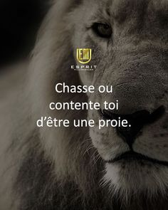 io - The only tool you need to launch your online business Lion Quotes, Fact Quotes, Marketing Software, Email Marketing, Rage, Citations Business, Citation Entrepreneur, French Quotes, Business Motivation