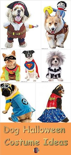These are some of the most popular dog Halloween costume ideas. Maybe your dog is different but about all that Coco will wear is a sweater for Halloween. There is no use buying something for her head because she will find a way to rip it off. So I usually opt for sweaters or something that goes on her back – the Cowboy Rider Dog Halloween Costume down below might work okay. Now I have friends whose dogs will let them put on all kinds of Halloween dog costumes.