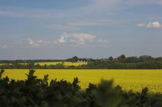 Globetrotter: Alt er gult og grønt