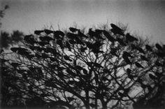金沢 深瀬 昌久 Masahisa Fukase: The Solitude of Ravens