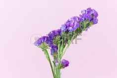 plant flower bloom blossom flora dry flowers pink background Stock Photo