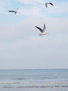 Meeresrauschen - Ein Tag am Meer Heute auf belle-melange.com