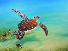 This painting was created to capture the serenity of a sea turtle swimming through the ocean. I wanted to capture the sea turtle from a backward view with the sun highlighting the red-orange shell against a bright aqua ocean! Sea Turtle Art, Baby Sea Turtles, Cute Turtles, Turtle Images, Underwater Painting, Turtle Swimming, Turtle Painting, Painting Canvas, Ocean Creatures