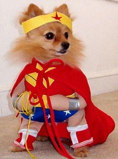 Pom Super hero cute animals halloween crafts diy costumes costume ideas dog costumes pet costume ideas