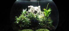 BiOrbAir Review - Growing Miniature Orchids in the BiOrbAir (part twenty-three) - Pumpkin Beth Orchid Terrarium, Terrariums, Miniature Orchids, Bottle Garden, Indoor Plants, House Plants, Beautiful Homes, Roots, Bloom