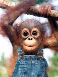 Cute monkey pictures always seem to brighten my day! Just something about them...