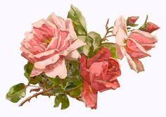 clip art...vintage roses