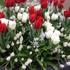 A beautiful tulip arrangement from the Keukenhof 2012. May be a nice idea for any special ocassion or even to have them in the house?