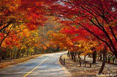 단풍이 무르익는 가을, 가을 단풍여행 어디로 떠나볼까요?