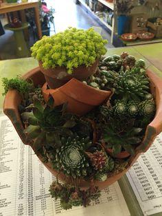 Succulent broken pot by Kristin Middleton