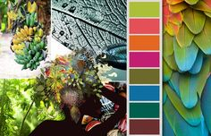 Fashion Color Trends for Spring-Summer Tropical Rainforest Summer Color Palettes, Summer Colors, Colour Pallette, Color Combos, Tropical Colors, Tropical Fish, 2015 Trends, Color Stories, Color Swatches
