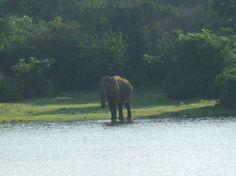 Sri Lanka Reisen Tissamaharama und Yala Nationalpark, Infos über Land und Leute, praktische Tipps und Reisebericht