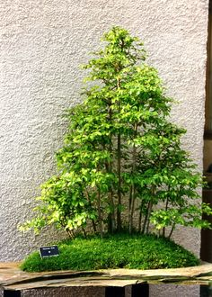 RK:Bonsai (Saikei)‍♀️More Pins Like This At FOSTERGINGER @ Pinterest ‍♀️