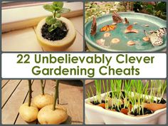 22 Unbelievably Clever Gardening Cheats I don't appreciate the hyperbole but there are some tips here I've never heard of and will check out.