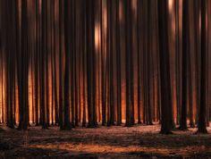 Сфоткал закат в лесу моё, фото