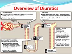 Overview of Diuretics Cardiac Nursing, Pharmacology Nursing, Nursing Career, Nursing Tips, Nursing Degree, Nursing Programs, Rn School, Pharmacy School, Nurse Teaching